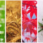 Four seasons collageFour seasons collage: Winter, Spring, Summer, Autumn.